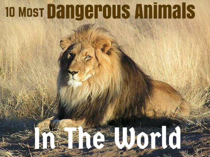 PPT - 10 Most Dangerous Animals In The World PowerPoint ...