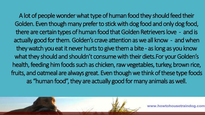 A lot of people wonder what type of human food they should feed their Golden. Even