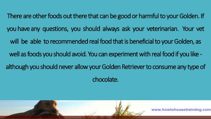 There are other foods out there that can be good or harmful to your Golden. If you have