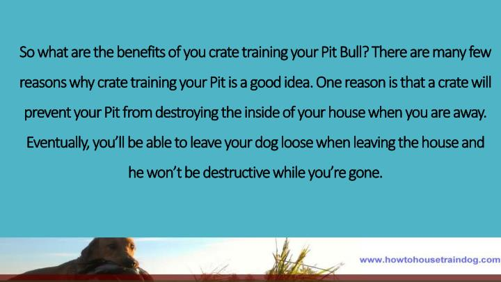 So what are the benefits of you crate training your Pit Bull? There are many few reasons