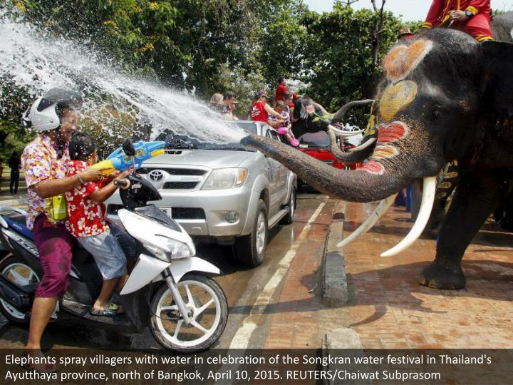 Elephants spray villagers with water in celebration of the Songkran water festival in Thailand's Ayutthaya province, north of Bangkok, April 10, 2015. REUTERS/Chaiwat Subprasom
