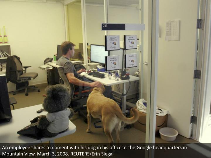 An employee shares a moment with his dog in his office at the Google headquarters in Mountain View, March 3, 2008. REUTERS/Erin Siegal