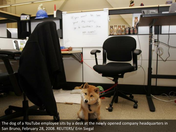 The dog of a YouTube employee sits by a desk at the newly opened company headquarters in San Bruno, February 28, 2008. REUTERS/ Erin Siegal