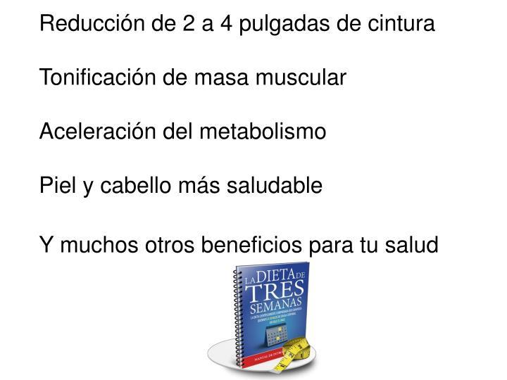 Reducción de 2 a 4 pulgadas de cintura