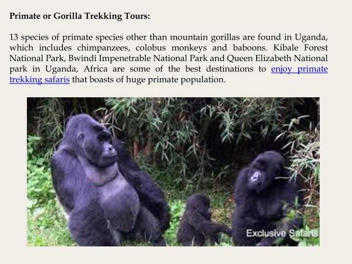 Primate or Gorilla Trekking Tours: