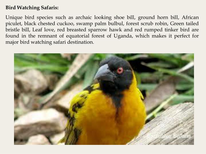 Bird Watching Safaris: