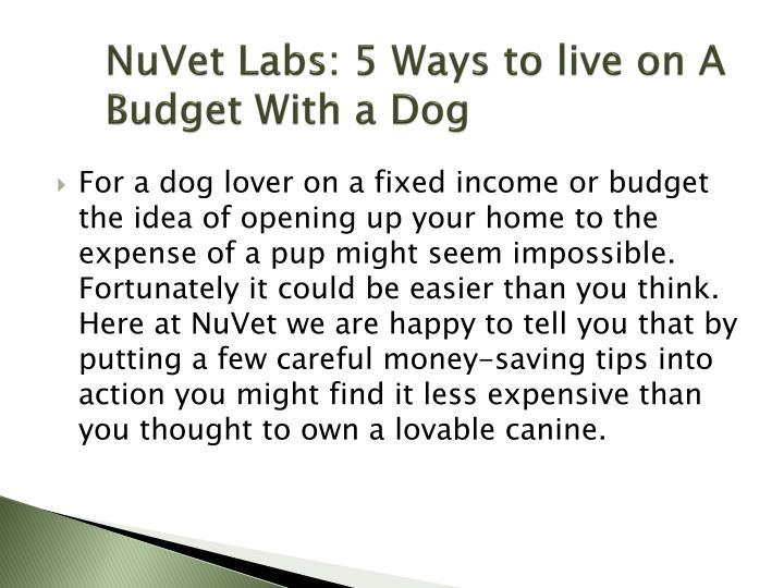 Nuvet labs 5 ways to live on a budget with a dog