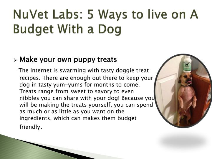 NuVet Labs: 5 Ways to live on A Budget With a Dog