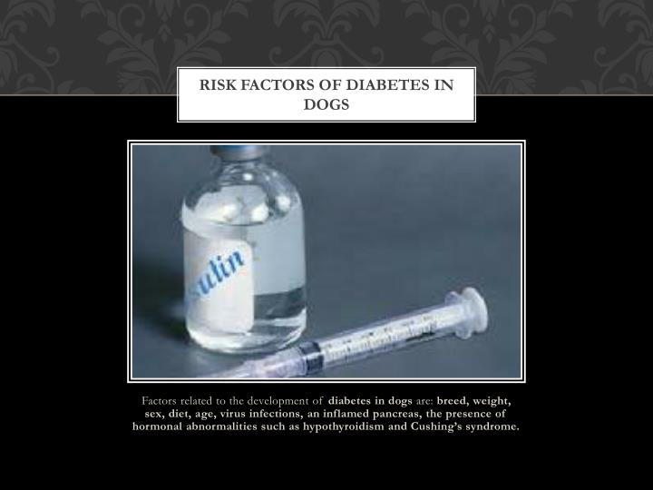 Risk factors of diabetes in dogs