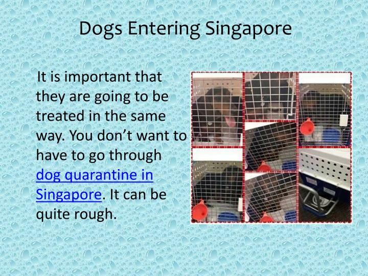 Dogs Entering Singapore