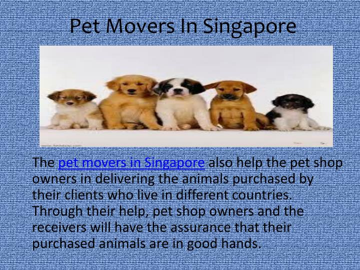 Pet movers in singapore