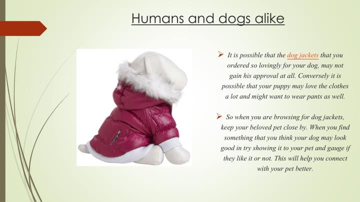 Humans and dogs alike