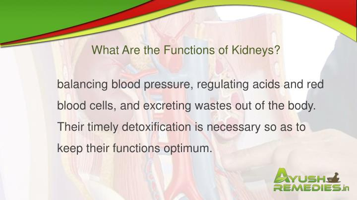 What Are the Functions of Kidneys?