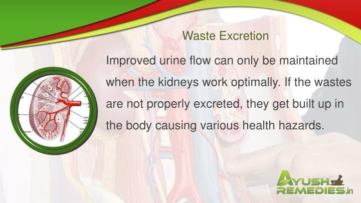 Waste Excretion