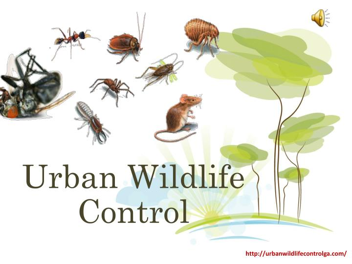 Urban wildlife control