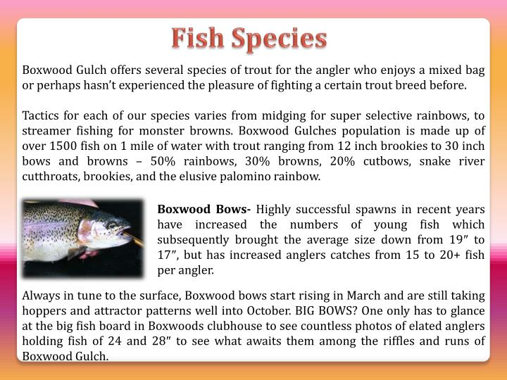 Boxwood Gulch offers several species of trout for the angler who enjoys a mixed bag