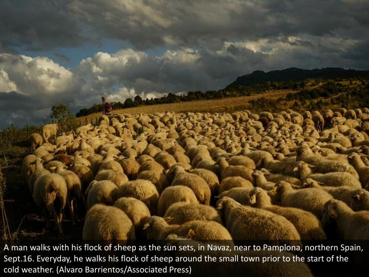 A man walks with his flock of sheep as the sun sets, in Navaz, near to Pamplona, northern Spain, Sept.16. Everyday, he walks his flock of sheep around the small town prior to the start of the cold weather. (Alvaro Barrientos/Associated Press)