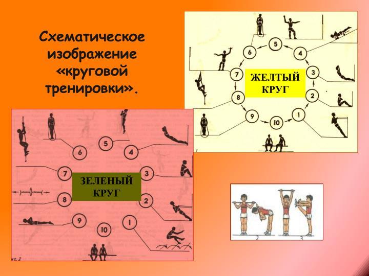 Схематическое изображение «круговой тренировки».