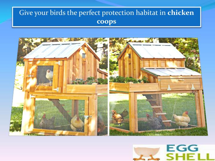 Give your birds the perfect protection habitat in