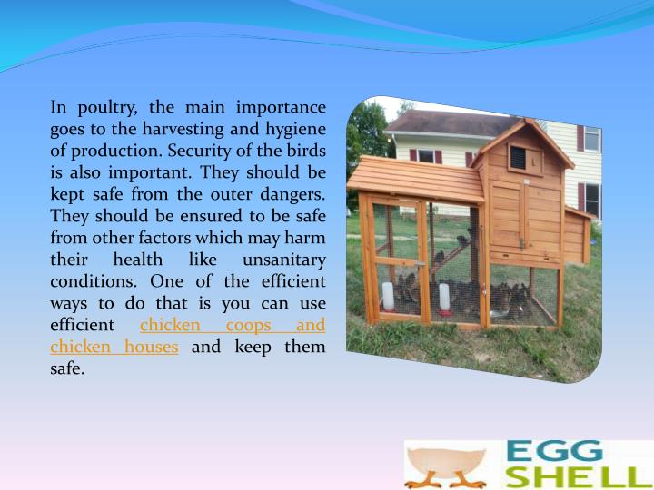 In poultry, the main importance goes to the harvesting and hygiene of production. Security of the birds is also important. They should be kept safe from the outer dangers. They should be ensured to be safe from other factors which may harm their health like unsanitary conditions. One of the efficient ways to do that is you can use efficient