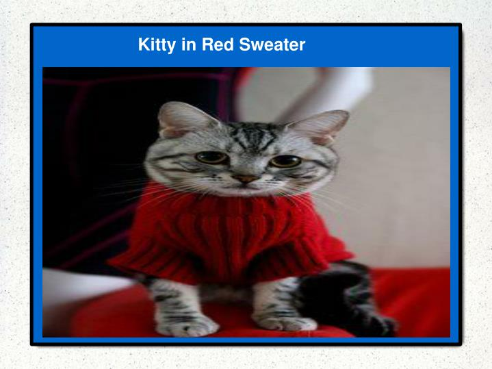 Kitty in Red Sweater