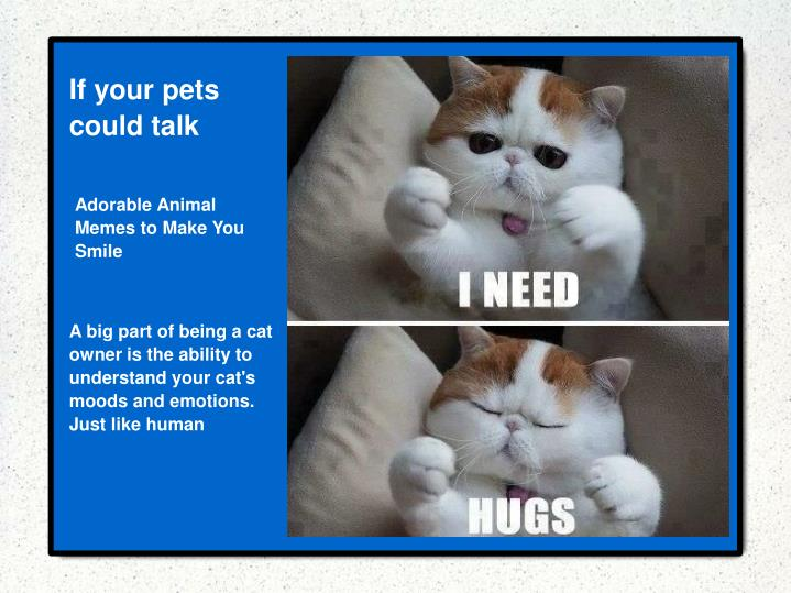 If your pets could talk