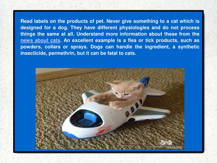 Read labels on the products of pet. Never give something to a cat which is designed for a dog. They have different physiologies and do not process things the same at all. Understand more information about these from the
