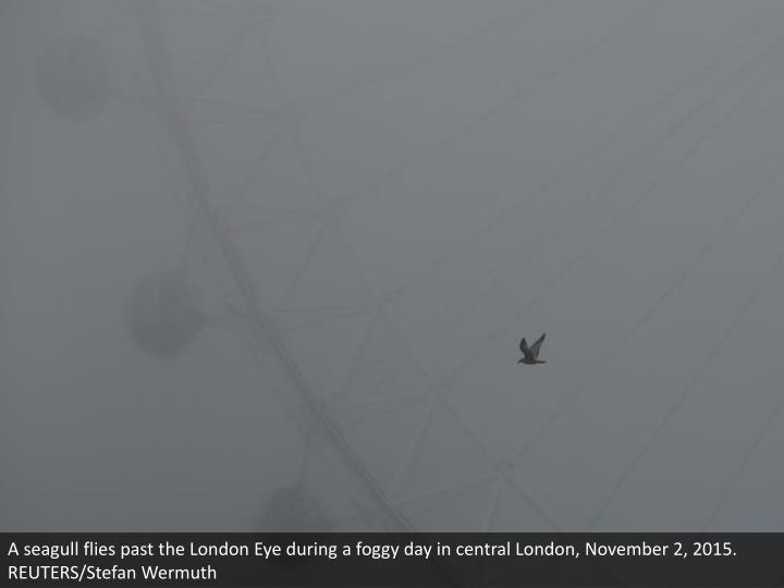 A seagull flies past the London Eye during a foggy day in central London, November 2, 2015. REUTERS/Stefan Wermuth