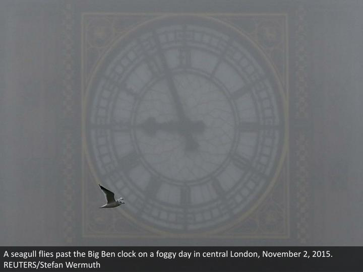 A seagull flies past the Big Ben clock on a foggy day in central London, November 2, 2015. REUTERS/Stefan Wermuth