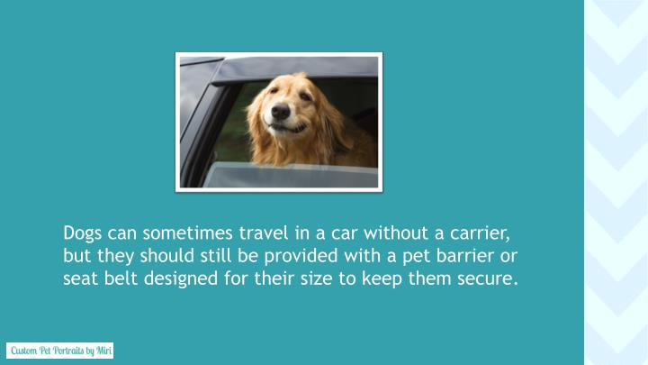 Dogs can sometimes travel in a car without a carrier,