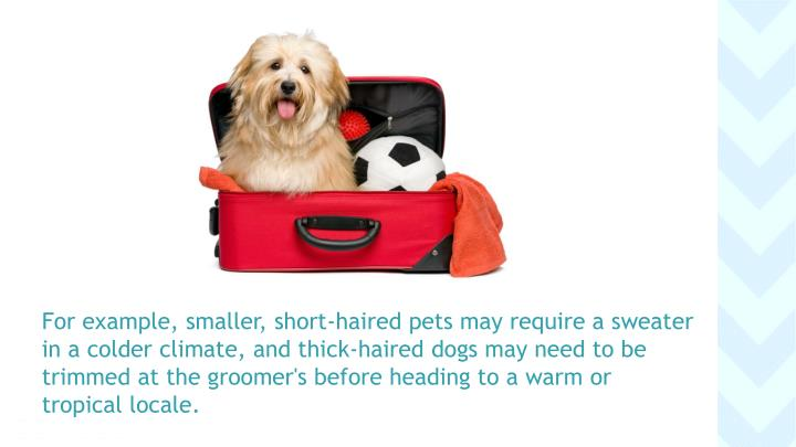 For example, smaller, short-haired pets may require a sweater
