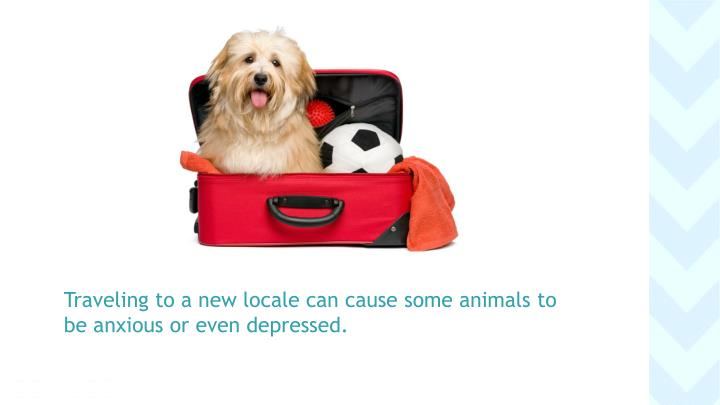 Traveling to a new locale can cause some animals to