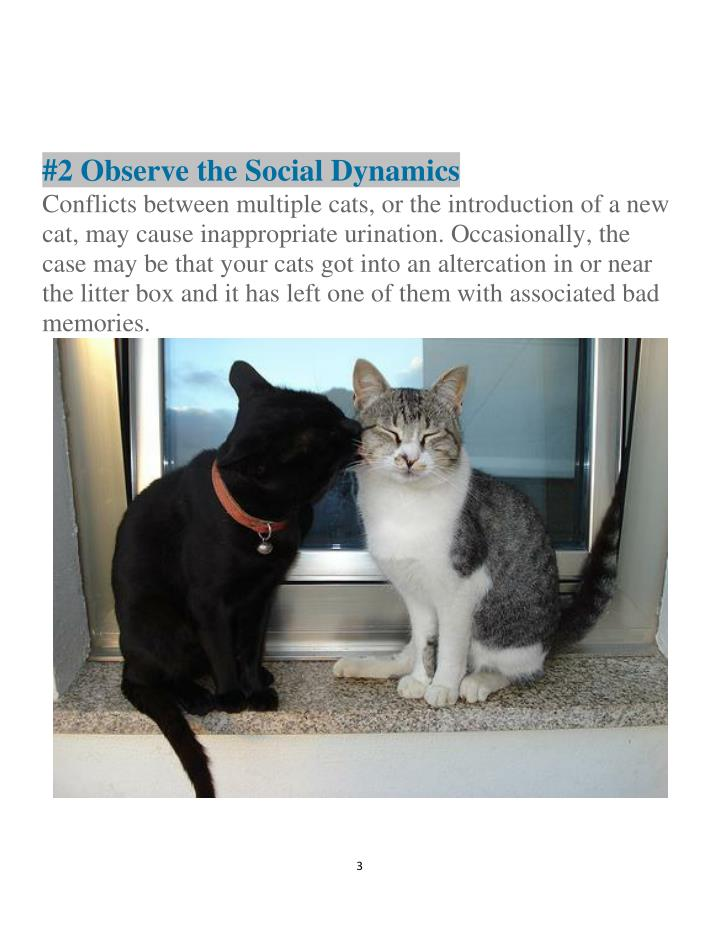 #2 Observe the Social Dynamics