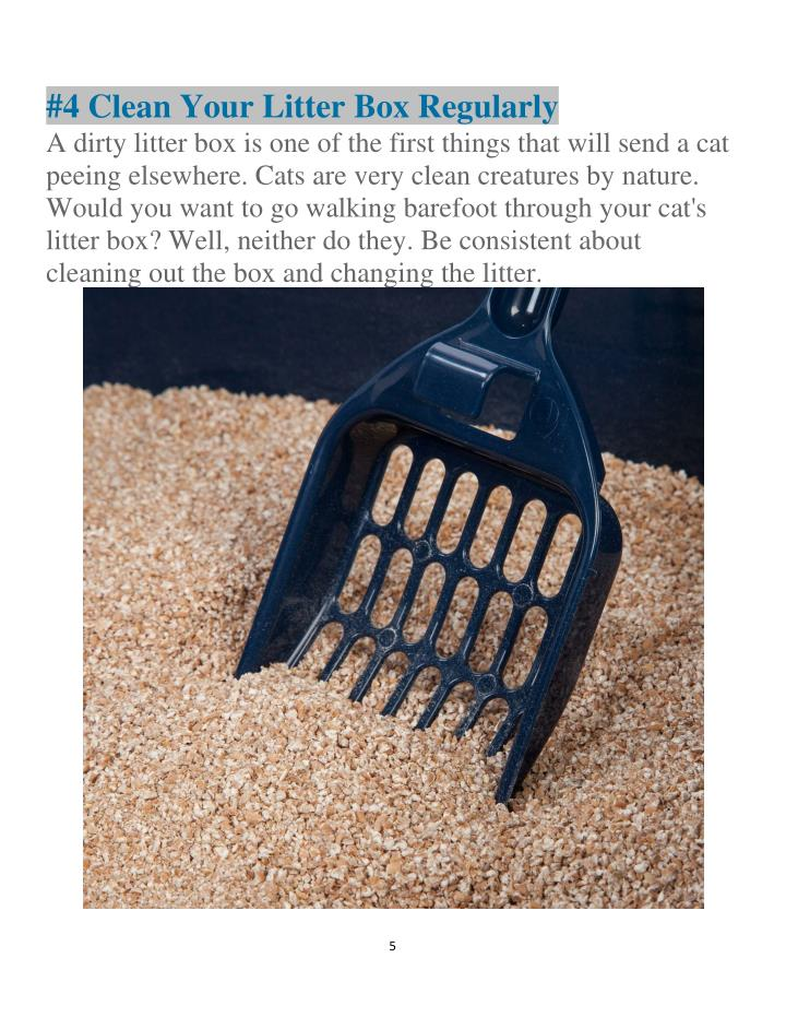 #4 Clean Your Litter Box Regularly