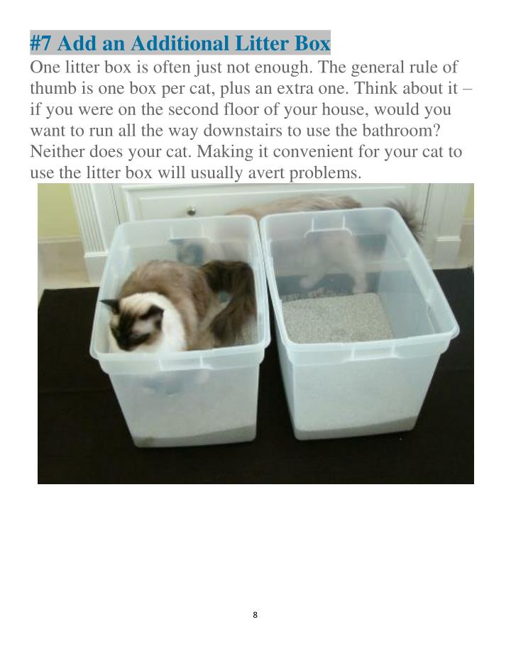 #7 Add an Additional Litter Box