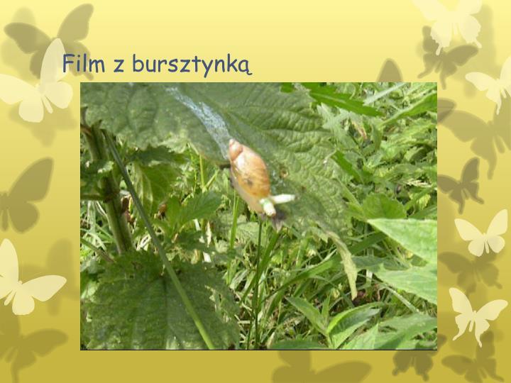 Film z bursztynką