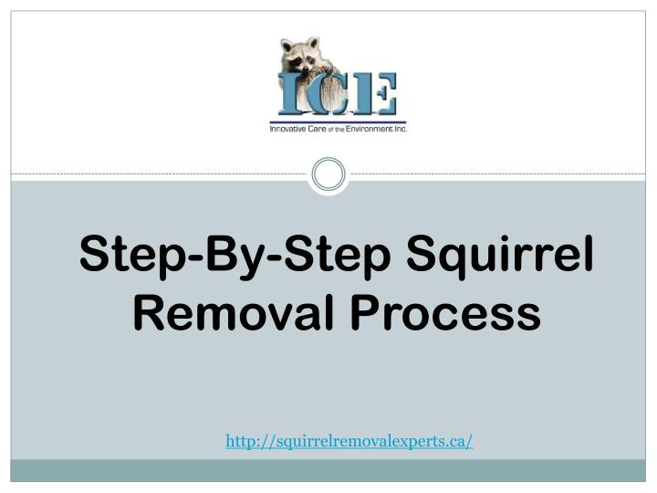 Step-By-Step Squirrel Removal