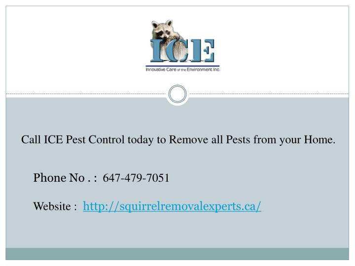 Call ICE Pest Control today to Remove all Pests from your Home.