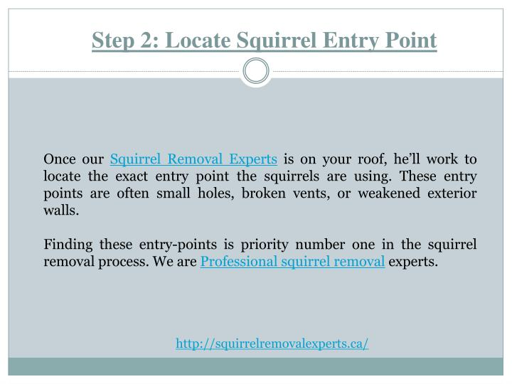 Step 2: Locate Squirrel Entry Point