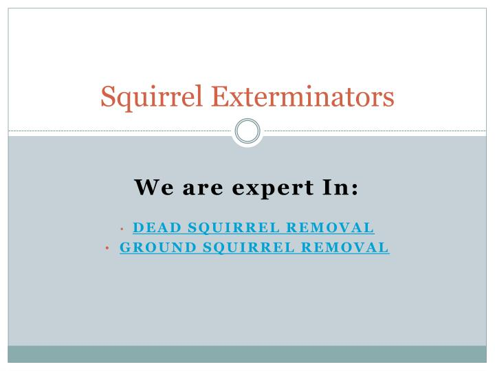 Squirrel Exterminators