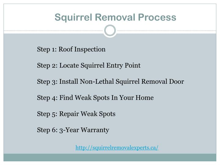 Squirrel removal process