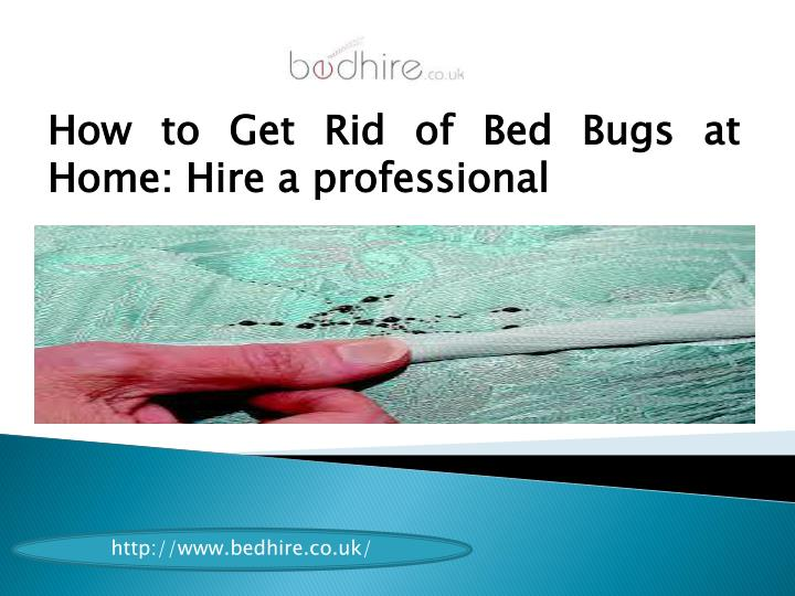 How to Get Rid of Bed Bugs at Home: Hire a professional