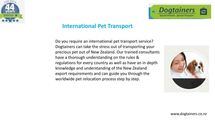 International Pet Transport