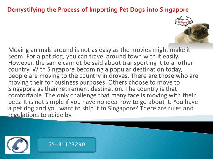 Demystifying the process of importing pet dogs into singapore