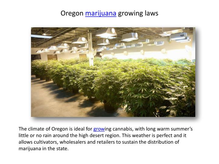 Oregon marijuana growing laws