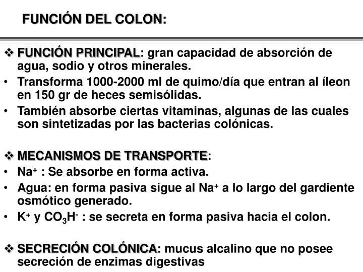 FUNCIÓN DEL COLON: