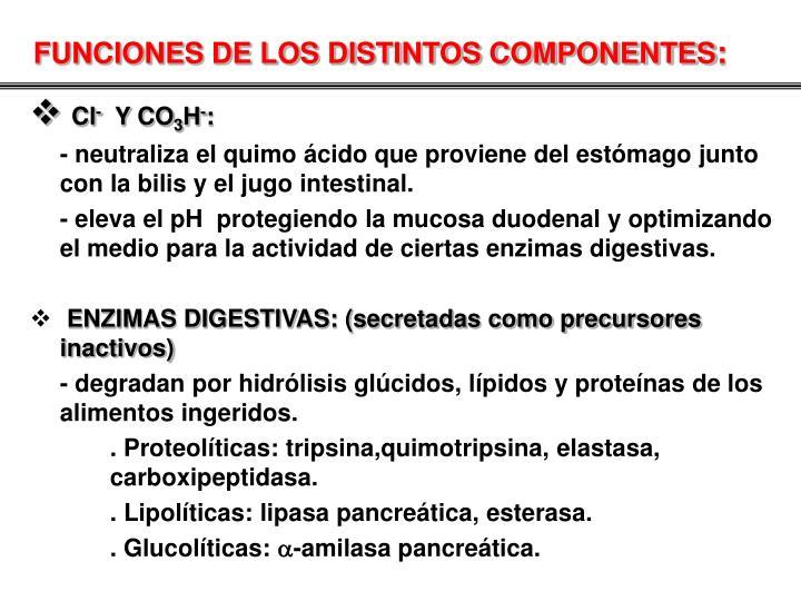 FUNCIONES DE LOS DISTINTOS COMPONENTES