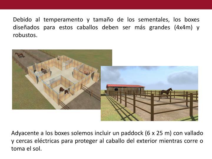 Debido al temperamento y tamaño de los sementales, los boxes diseñados para estos caballos deben ser más grandes (4x4m) y robustos.