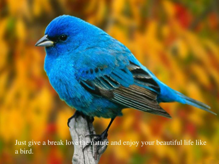 Just give a break love the nature and enjoy your beautiful life like a bird.