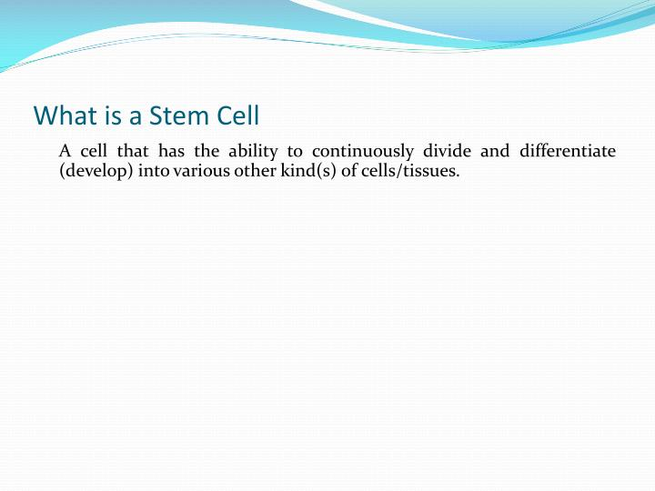 What is a Stem Cell
